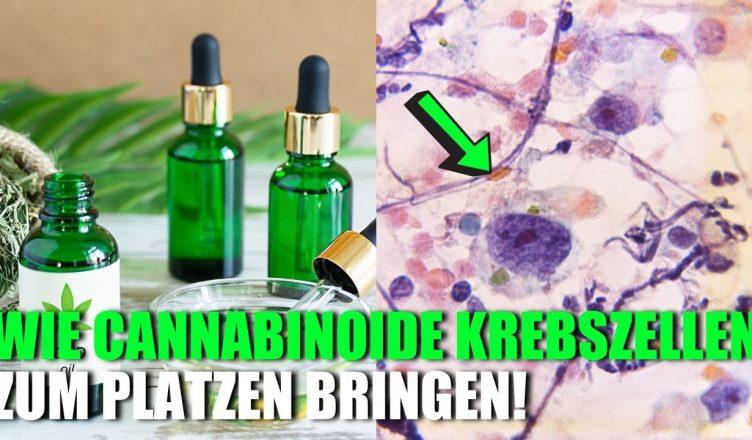 Wie Cannabinoide Krebszellen zum Platzen bringen!
