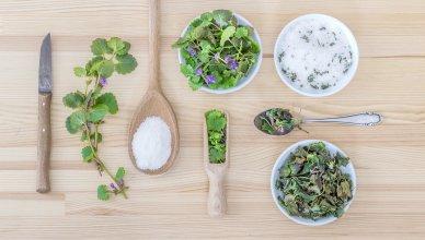 Diese 8 Kräuter sind Balsam für unser Gehirn