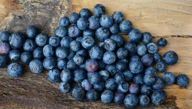 Blaubeeren (Heidelbeeren) unterstützen das Gehirn und wirken entzündungshemmend