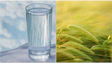 Die brillanten Vorteile von Gerstenwasser