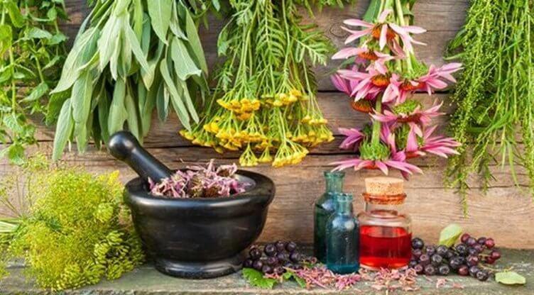 Die wichtigsten Inhaltsstoffe von Heilpflanzen