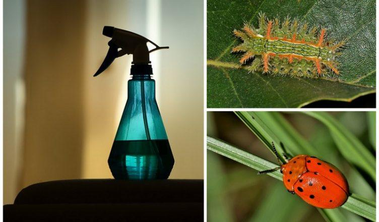 10 Natürliche Pestizide, die Du selbst herstellen kannst