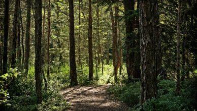 Verbessere deine Stimmung und Gehirnfunktion mit Waldbaden