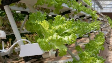Hydrokultur: Die nachhaltigste Art der Landwirtschaft?