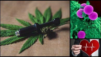 Cannabisöl reduziert Schmerzen und schützt vor Krebs