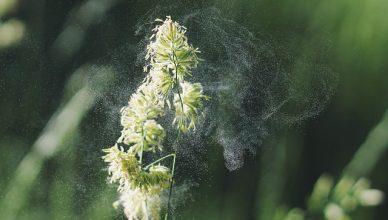 13 Wirksame Methoden zur Bekämpfung von Pollen