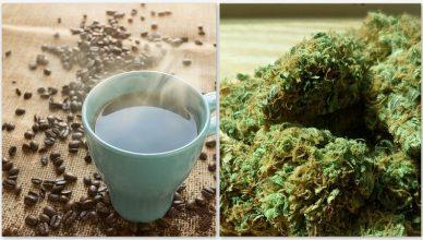 Die Verbindung zwischen Kaffee und dem Endocannabinoid-System