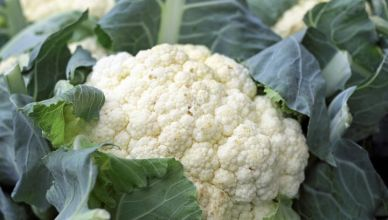 Blumenkohl verringert das Risiko für jegliche Art von chronischen Krankheiten