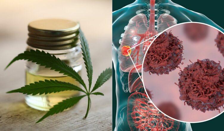 Cannabis Krebszellen