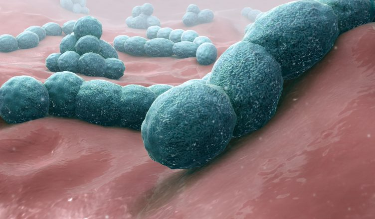 """So ernähren sich """"fleischfressende"""" Bakterien von unserem Fleisch (Gewebe)"""