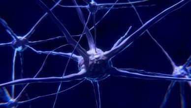 Möglicher Zusammenhang zwischen Vitamin D-Mangel und Verlust der Gehirnplastizität