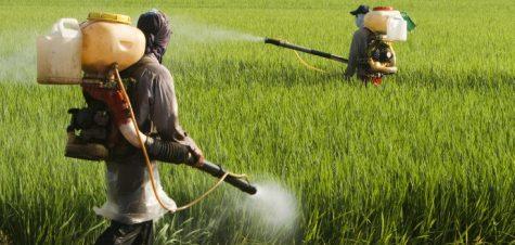 Korruption: Regierungsbehörden stützten sich auf industriell finanzierte Herbizidstudien, um Glyphosat für sicher zu erklären