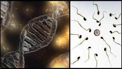 War die sexuelle Fortpflanzung dazu gedacht, Krebs zu verhindern?