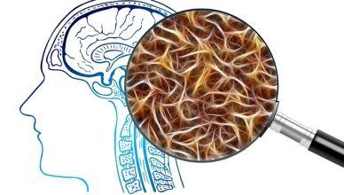 Warum entstehen psychische Erkrankungen? Hinweise aus dem visuellen Gehirn