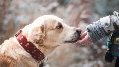 Wie Hunde uns helfen können, unsere eigene Darmgesundheit zu erforschen