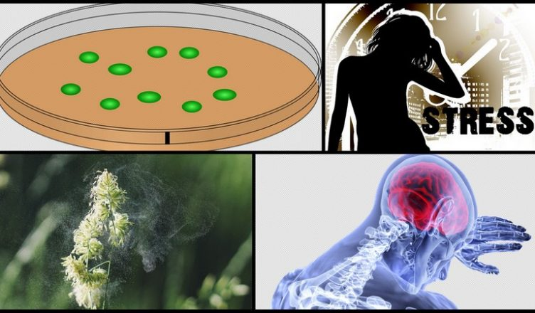 Die gesundheitlichen Vorteile von Sporopollenin