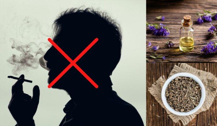 10 Kräuter, die dich zum Nichtraucher machen